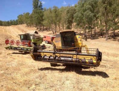 New Holland Al59 – Collina plus